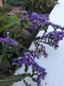 Blüten violett